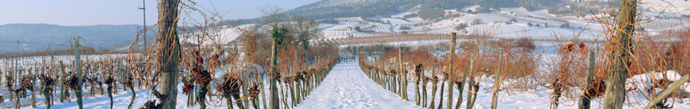 Perrot-Minot Bourgogne Vieilles Vignes