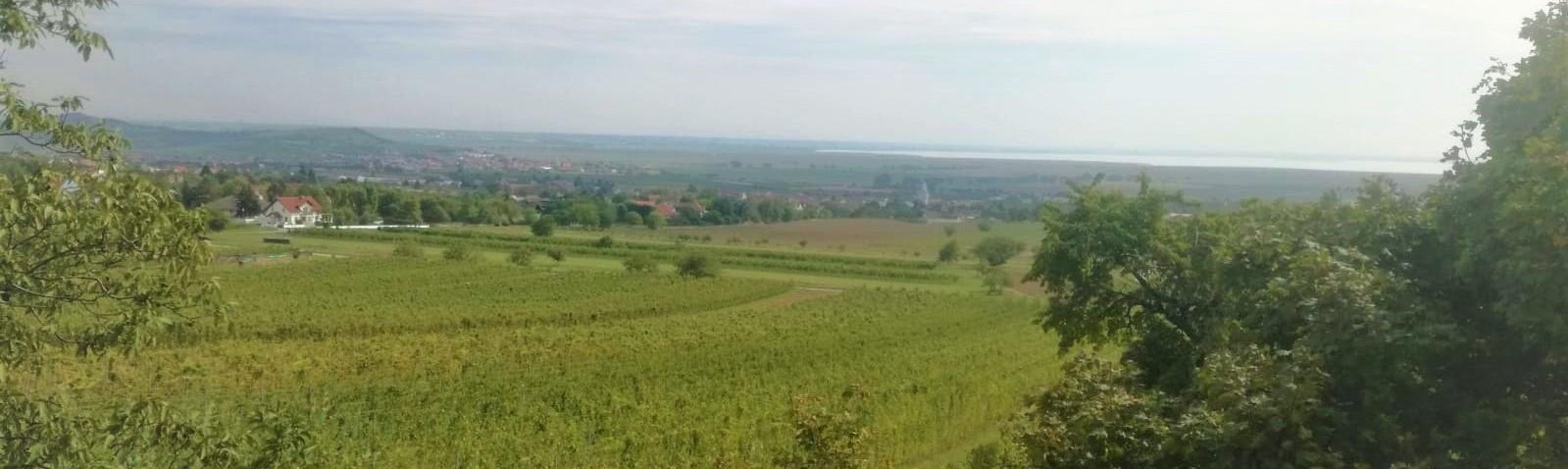 Weinbaugebiet des Monats